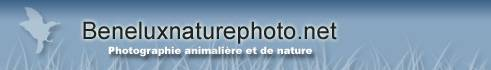 Beneluxnaturephoto.net - Photographie animalire et de nature